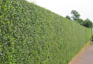 hedge-cutting-maintenance-vauxhall